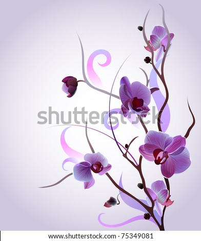 vector orchid branch