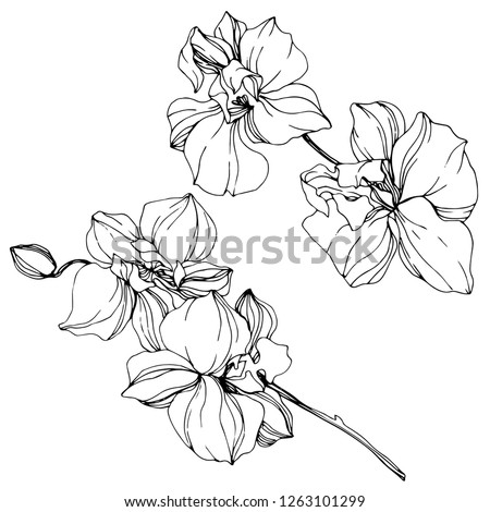 Vector. Orchid flower. Floral botanical flower. Wild spring leaf wildflower isolated. Black and white engraved ink art. Isolated orchid illustration element on white background. #1263101299