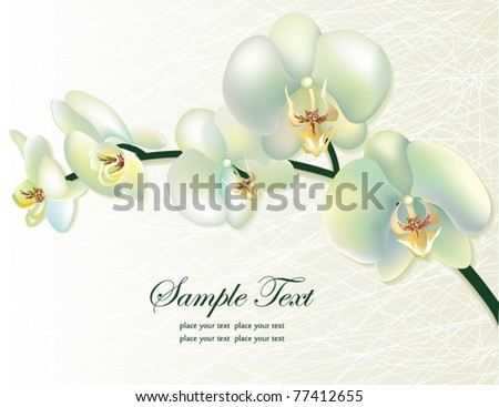 Vector orchid flower greeting card