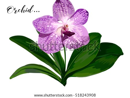 vector orchid flower with green