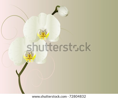 Vector orchids on a green and pink background. - stock vector