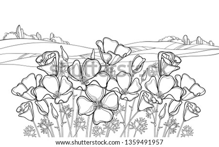 Vector outline California poppy flower or Eschscholzia, leaf and bud in black on the white background with field and sky. Ornate landscape with contour poppy bunch for summer coloring book.