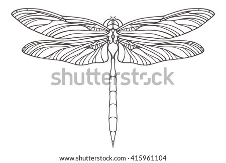 vector outline dragonfly
