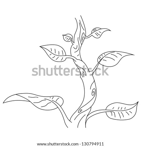 Vector outline of the giant bean plant.