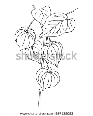 vector outline physalis hand