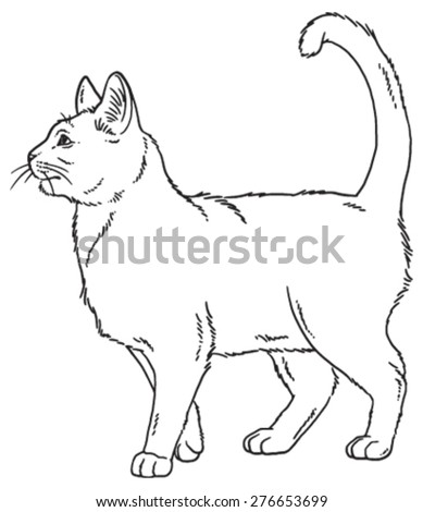 vector outline sketch if a cat
