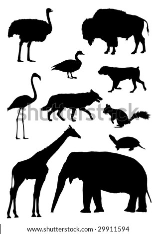 Vector outlines for animals african ostrich, bison, canadian goose, mastiff dog, flamingo, wolf, squirrel, tortoise, giraffe, asian elephant
