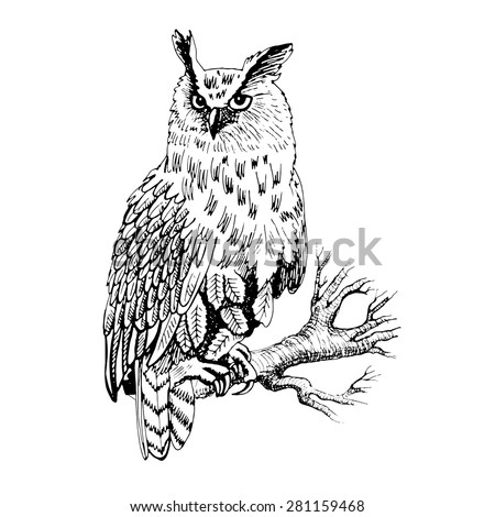 vector owl on a branch 2 white