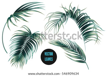 Vector palm leaves, jungle leaf set isolated on white background. Tropical botanical illustrations, green foliage, floral elements