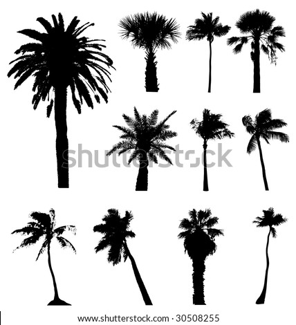Vector palm tree palmtree silhouette set california isolated tall drawing abstract frond full illustration black white plant travellers tropical collection tracing outline trace shape element  clip