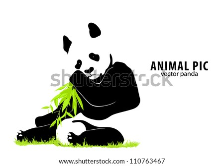 vector panda on white background