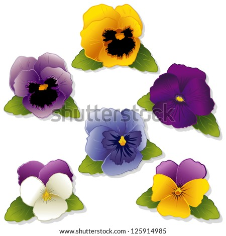 vector   pansies and johnny