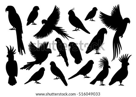 Shutterstock Vector parrot silhouettes of amazon jungle isolated on white background