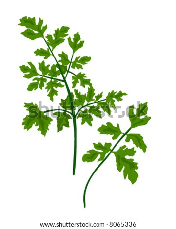 Vector Parsley is hand drawn original artwork.  The vector is in AI-EPS8 format.