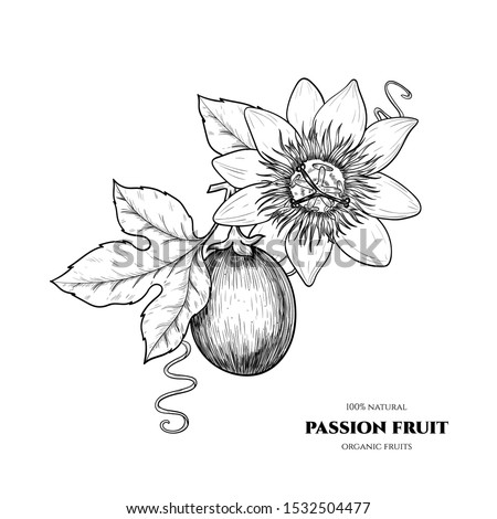 Vector passion fruit  hand drawn sketch. Vintage style