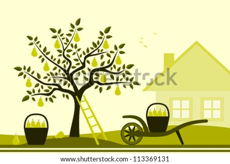 vector pear tree, hand barrow with basket of pears and cottage