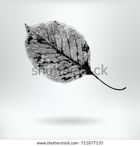vector pear tree leaf structure