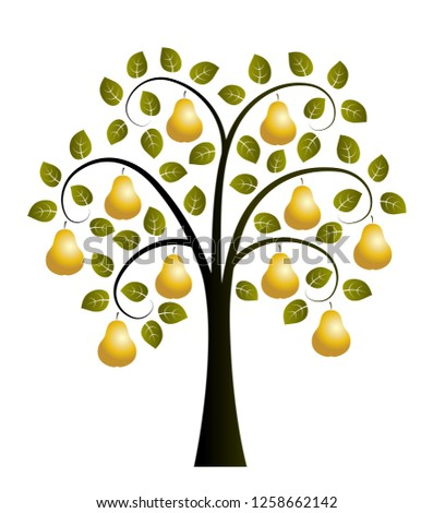 vector pear tree with golden