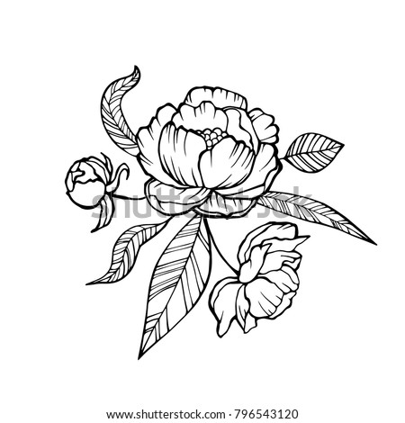 Vector Peony Coloring book page for adults. Hand drawn artwork. Love bohemia concept for wedding invitation, card, ticket, branding, logo, label. Gift for girl, women. Black and white.