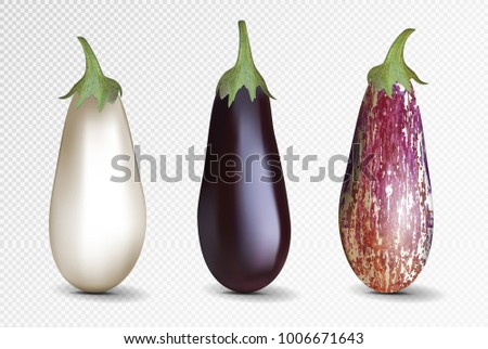 Vector photo-realistic fresh aubergine on a transparent background. 3D eggplant illustration. Violet, whiye and pockmarked eggplant.