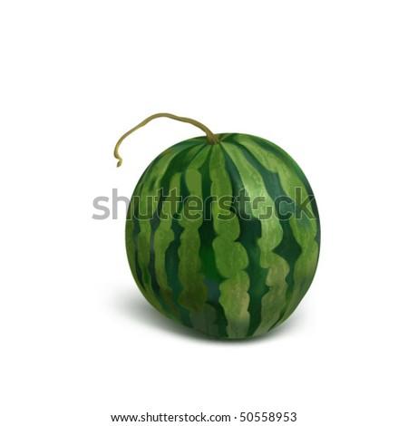 vector photo realistic water melon