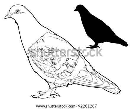 Vector Pigeon Line Drawing with Silhouette.