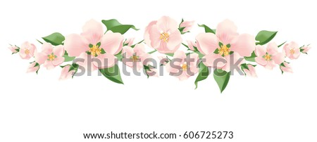 vector pink flowers on white
