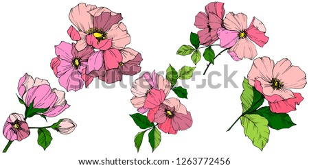 Vector Pink rosa canina. Floral botanical flower. Wild spring leaf wildflower isolated. Engraved ink art. Isolated rosa canina illustration element.