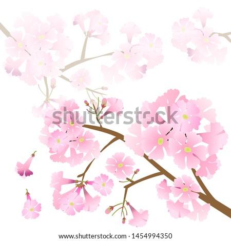 vector pink trumpet tree
