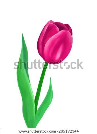 vector pink tulp