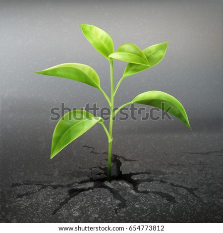vector plant sprout through