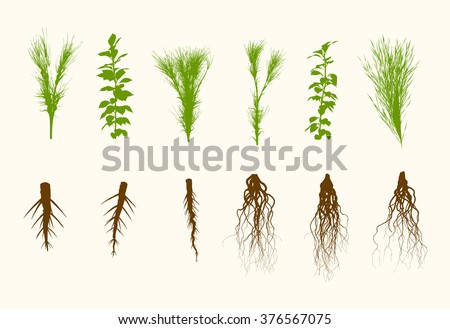 vector plants and roots set