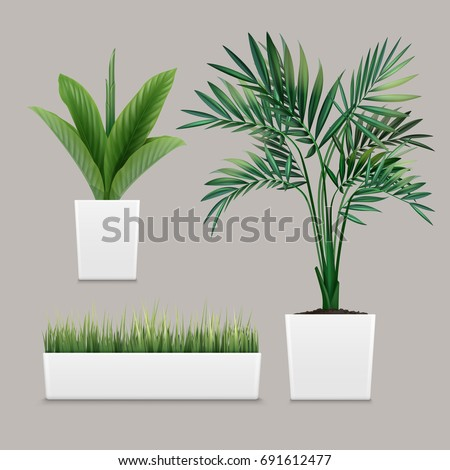Vector plants potted in container for use indoors as houseplant and decoration on gray background
