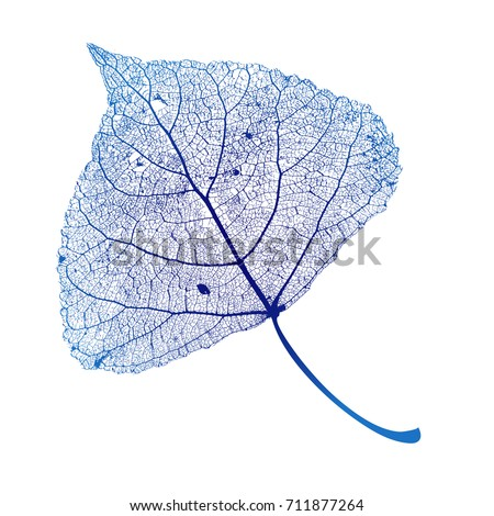 vector poplar leaf structure