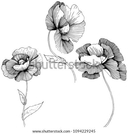 Vector poppy. Floral botanical flower. Wild spring leaf wildflower isolated. Vector wildflower for background, texture, wrapper pattern, frame or border. #1094229245