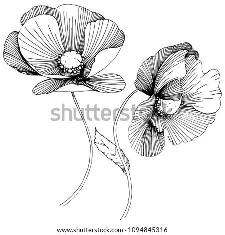 Vector poppy. Floral botanical flower. Wild spring leaf wildflower isolated. Vector wildflower for background, texture, wrapper pattern, frame or border. #1094845316
