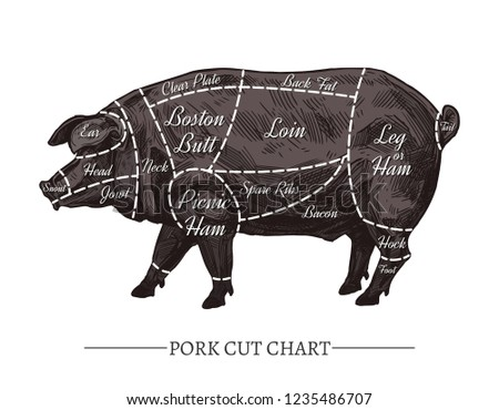 Hog Meat Cuts Download Free Vector Art Stock Graphics Images