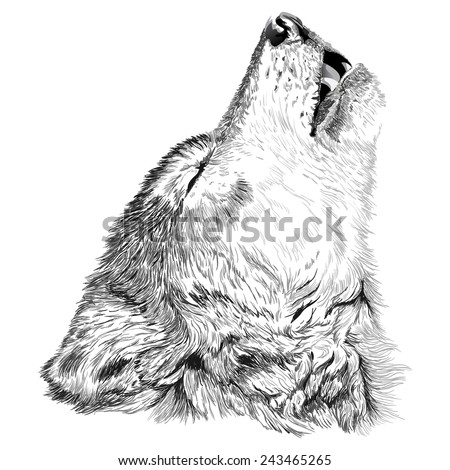 vector portrait of angry wolf