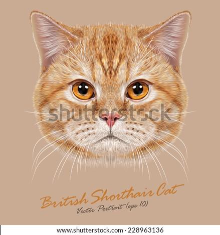 vector portrait of domestic cat