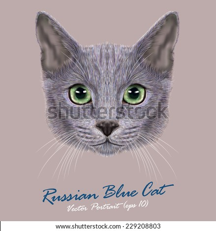 vector portrait of domestic cat