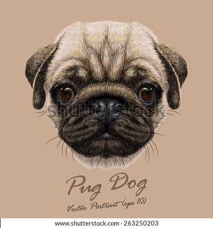 vector portrait of pug dog