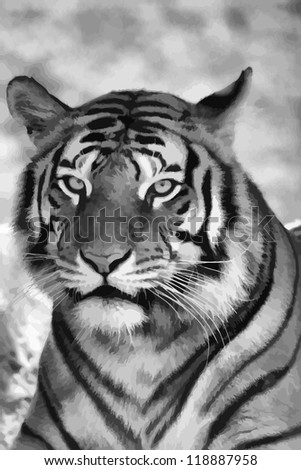 Vector Portrait of Tigers Face in Black and White