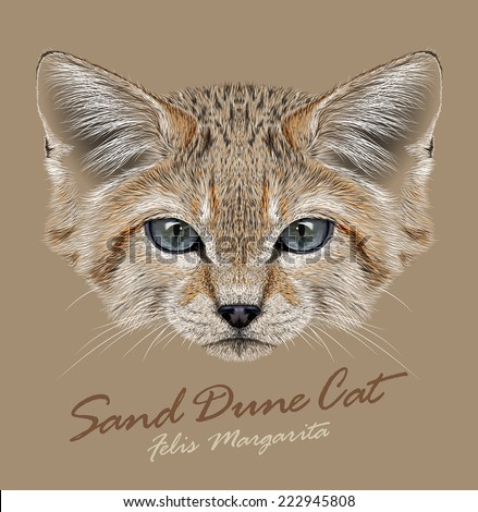 Vector Portrait Sand Dune Cats. Small Wild Cat living in the desert.