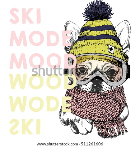 9addd5ec4504 Vector poster with close up portrait of beagle dog.Ski mode mood. Puppy  wearing
