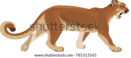 vector puma cougar  puma