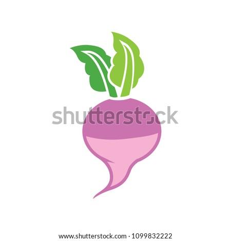 vector radish illustration