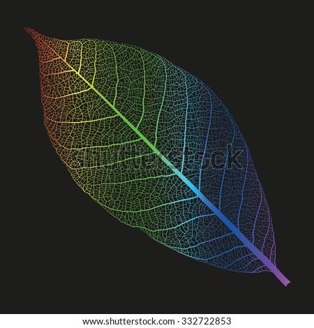 vector rainbow skeleton of leaf
