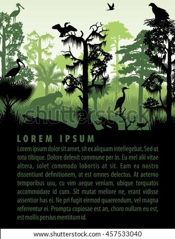 vector rainforest wetland