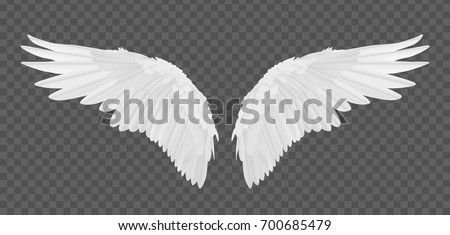 vector realistic angel wings