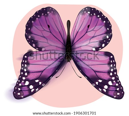 Vector realistic butterfly close up